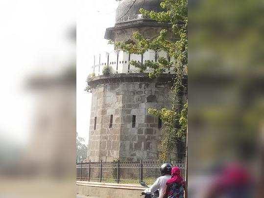 दिल्ली दरवाजा वर उगवले रोपटे