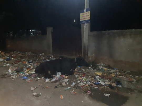 कचरा, मोकाट जनावरांचा उपद्रव