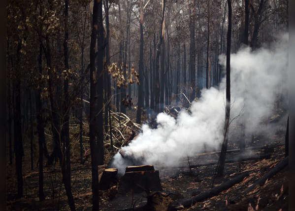 4 महीने से झुलस रहे हैं ऑस्ट्रेलिया के जंगल