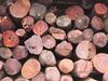 भारत को 1.7 लाख kg लाल चंदन लौटाएगा नेपाल, तस्करों से पकड़ा गया था