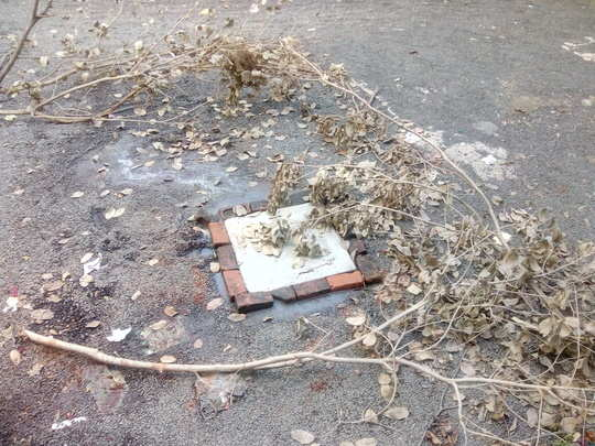 ड्रेनेजलाइन फुटल्याने परिसरात अस्वच्छता