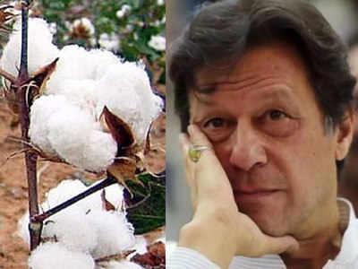 कपास उत्पादन पर बहुत निर्भर है पाकिस्तान की अर्थव्यवस्था