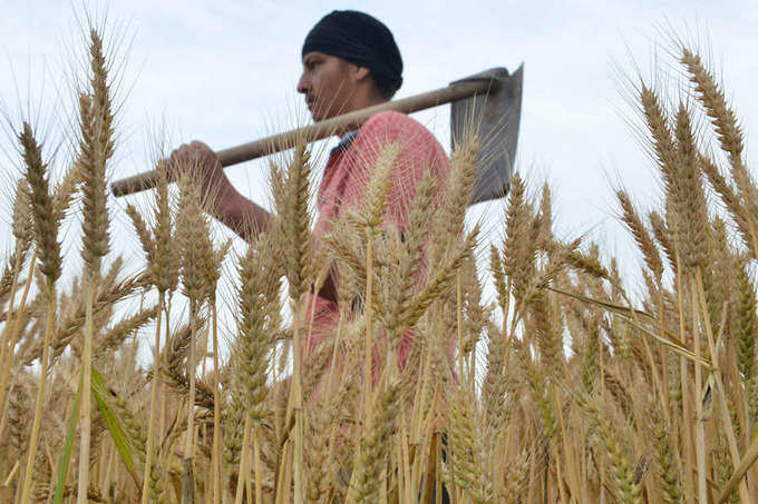 India hikes wheat import duty to support local farmers