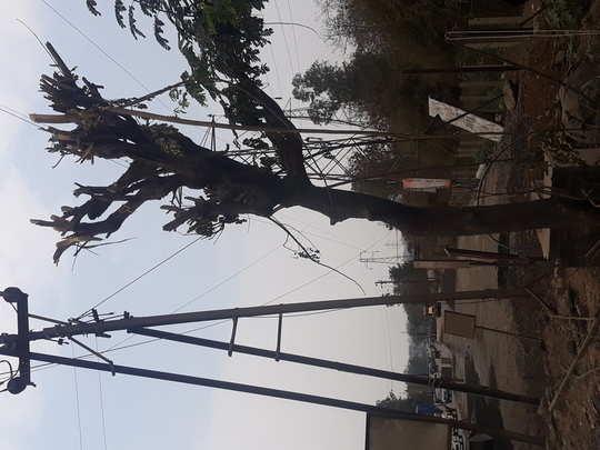 राज्य महामार्गावरील झाडांवर कुऱ्हाड