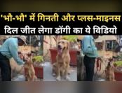 सोशल स्यापा: 'कैलकुलेटर' डॉगी का विडियो वायरल