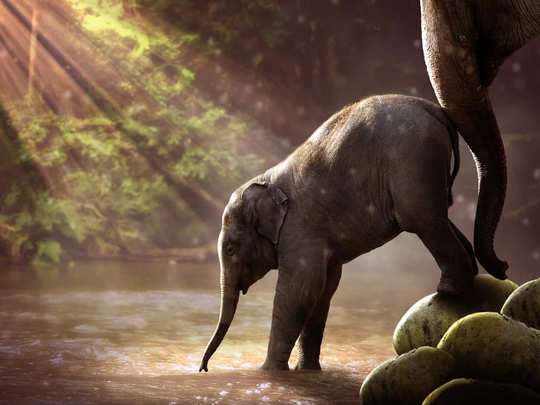 elephant steps