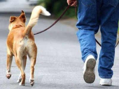 कुत्ते के मालिक को जेल