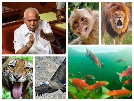 bsy with wild animals