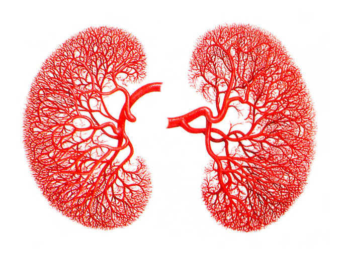 Kidney is spoiled and erotic symptoms - Stay tuned as soon as you read!