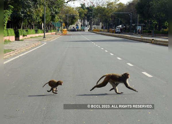 सड़कों पर नहीं शोर करने वाली गाड़ियां