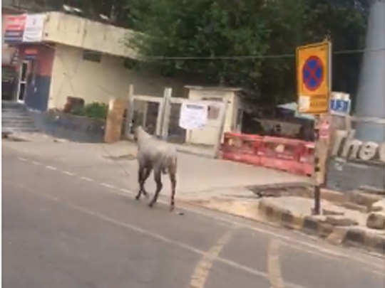 नोएडा में खाली सड़कों पर घूम रहे हैं जानवर