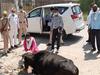 लॉकडाउनः सुल्तानपुर डीएम ने बेसहारा जानवर को खिलाया रोटी और फल
