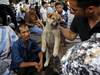 कोरोना वायरस: चीन के इस शहर में कुत्ते-बिल्ली का मांस खाने पर लगी रोक