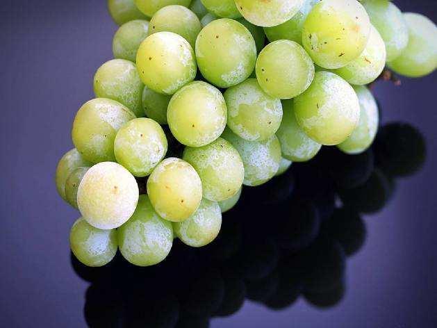 Immunity Booster food : इम्यूनिटी बढ़ाने के साथ माइग्रेन में असरदार है अंगूर का सेवन, होते हैं ये 7 बेहतरीन फायदे