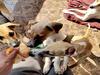 कोरोनाः चीन के इस कदम से हर साल बचेगी एक करोड़ कुत्तों की जान, ऐनिमल राइट ग्रुप ने की सराहना
