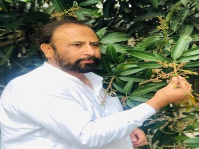 शाहजहांपुर में आम के पेड़ पर लगे फल दिखाते राजधानी फार्म्स एवं नर्सरी के मालिक नदीम खान