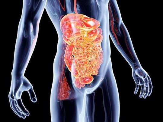 digestive-1