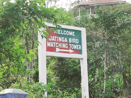 jatinga valley assam: know about mysterious jatinga valley known for bird  suicides | Navbharat Times Photogallery