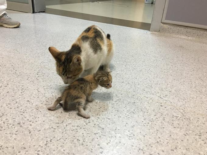 बच्चे को मुंह में लेकर पहुंची मां