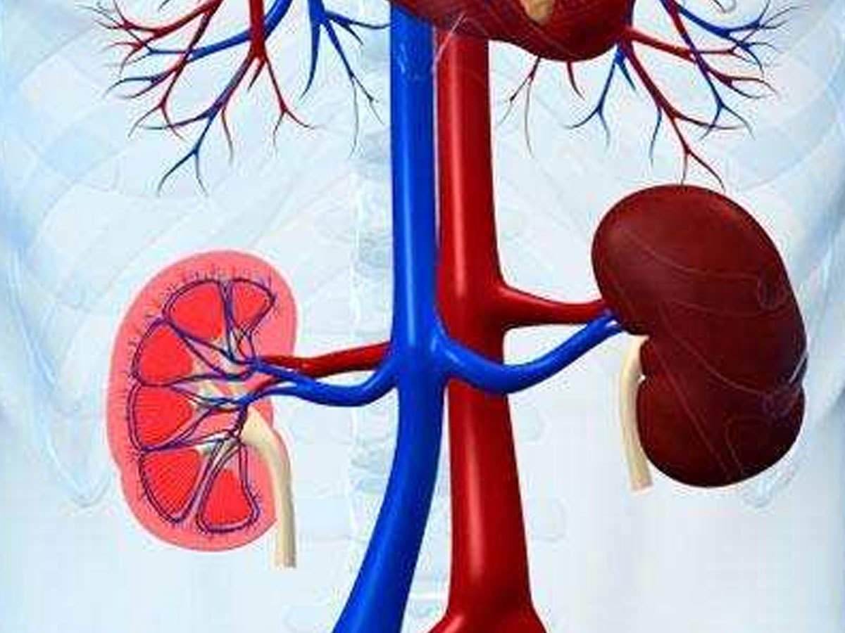 "Kidney Infection À¤à¤¸ À¤•à¤° À¤• À¤¡à¤¨ À¤‡ À¤« À¤• À¤¶à¤¨ À¤• À¤ªà¤¹à¤š À¤¨ À¤¯ À¤¹ À¤‡à¤¸à¤• À¤²à¤• À¤·à¤£ À¤""र À¤• À¤°à¤£ Tips To Keep Kidney Healthy How To Check Kidney Infection In Hindi Navbharat Times"