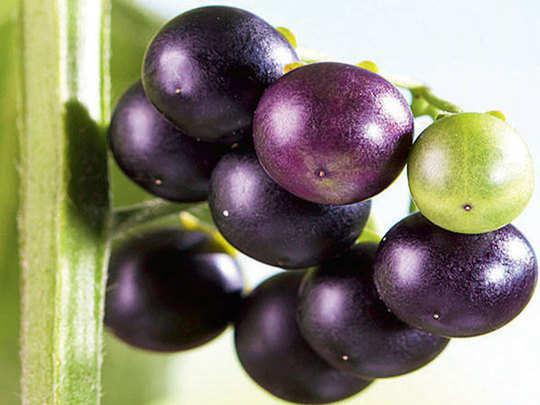 health benefits of makoy black night or night shade fruit
