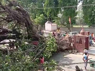 पटना के अशोक राजपथ पर पटना कॉलेज के मुख्य गेट के सामने रोड पर मौजूद पुराना पेड़ अचानक गिर गए।