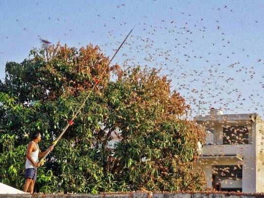 locust attack in tamil nadu: ஹேப்பி நியூஸ் ...