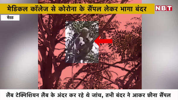monkey snatched coronavirus sample from lab technician hand in meerut medical collage