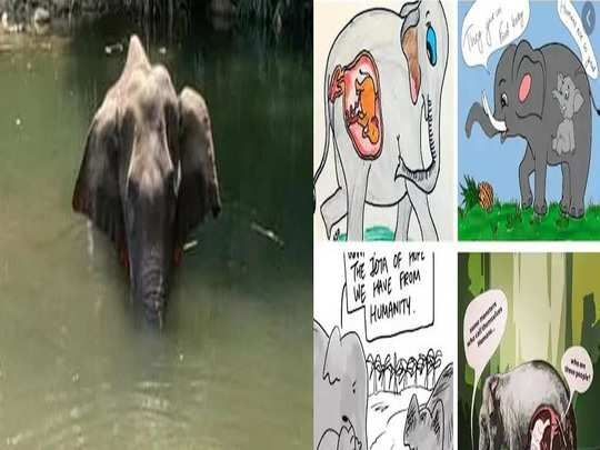 whole nation condemned for pregnant elephant killed in kerala