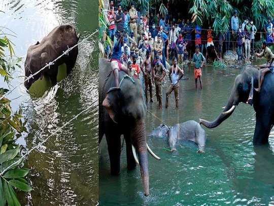 rs 50,000 reward offered for information on people involved in elephant death in kerala