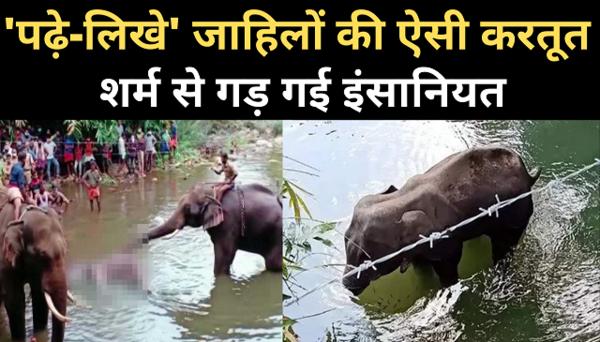 anger on social media against death of pregnant elephant in kerala