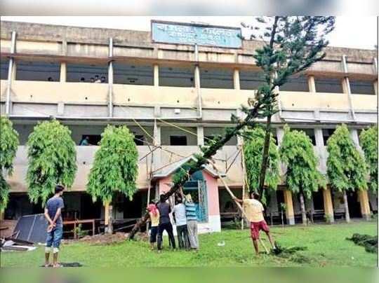 বাগনান কলেজে ঝড়ে পড়া পাইন গাছটিকে তুলছেন ছাত্ররা --- রাকিব ইকবাল