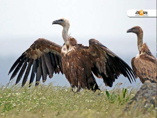 vulture breeding centre