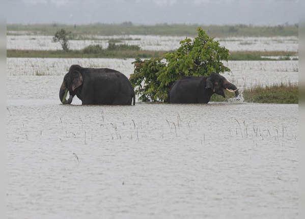 पानी के बीच फंसे हाथी