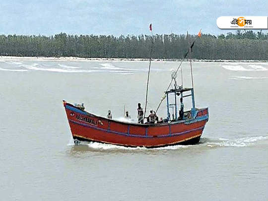 Looking for hilsa fish