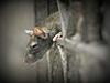 Bubonic Plague: चीन के बयन्नूर शहर में फैला ब्यूबोनिक प्लेग, अलर्ट जारी