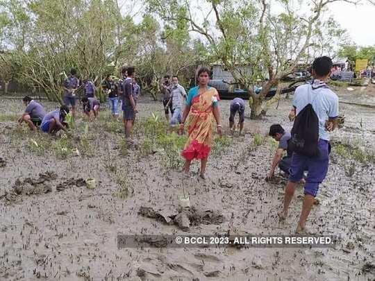 Sundarbans Mangrove Plantation