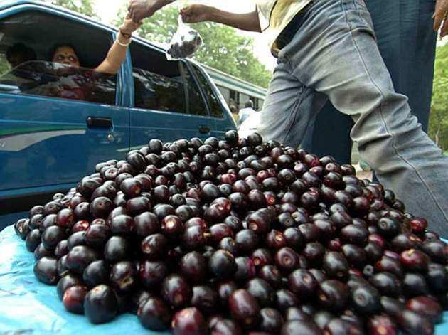 जलवायु परिवर्तन के चपेट में गुणकारी फल जामुन भी, जानें क्यों नहीं अभी तक बाजार में आया
