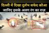 देखिए, दिल्ली में नजर आया दुर्लभ सफेद कौआ