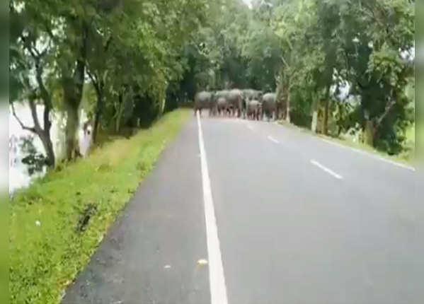 झुंड में सुरक्षित ठिकाना ढूंढने निकल पड़े हाथी