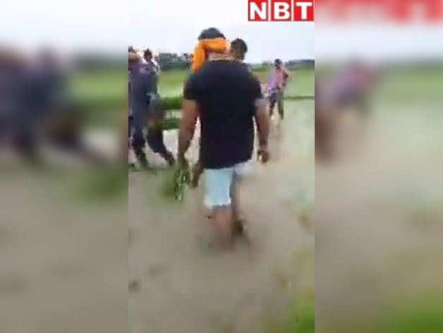 जब भोजपुरी सुपरस्टार खेसारी लाल ने खेत में की धान की रोपाई, Video वायरल