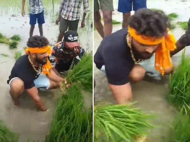 khesari lal farming video