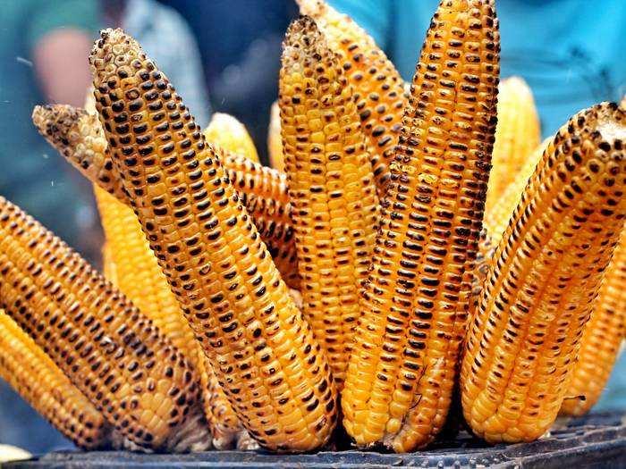 Corn Benefits : मॉनसून जरूर करें कॉर्न का सेवन, सेहत को पहुंचाता है ये 5 फायदे