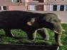 Haridwar latest news: रिहायशी कॉलोनी में घुसा जंगली हाथी, तोड़ डाले कई वाहन