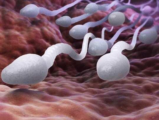 हस्तमैथुन केल्याने रोगप्रतिकारक शक्ती आणि कांदा खाल्ल्याने वीर्यातील शुक्राणूंची संख्या वाढते हे खरं आहे का?