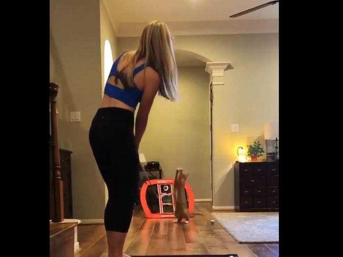 cat-catch-video