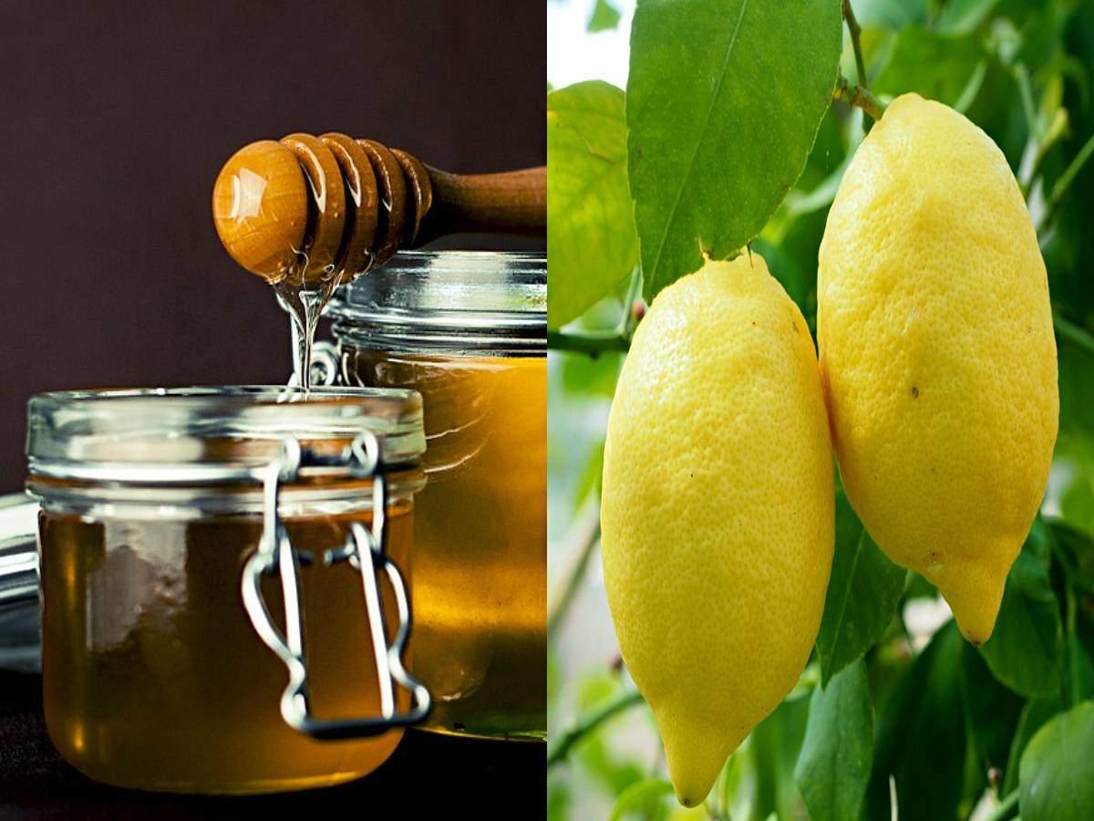 honey and lemon benefits: Honey And Lemon Benefits : शहद और नींबू का करें सेवन, मिलेंगे ये 5 फायदे - health benefits of honey and lemon in hindi | Navbharat Times