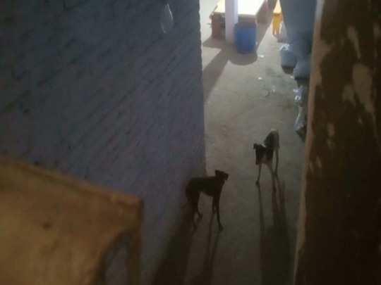 कैंटीन में कैद दोनों कुत्ते