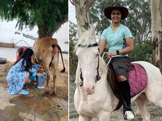 हरियाणा की छोरी मनु भाकर का देसी अंदाज, गाय का दूध दुहने का वीडियो हो रहा वायरल