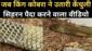 जब किंग कोबरा ने उतारी केंचुली, सिहरन पैदा करने वाला वीडियो